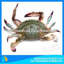 Crabe glacé à la coquille souple de bonne qualité à vendre