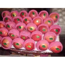 2015 Fresh Qinguan Apple with Better Taste
