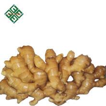 venta caliente 250 g jengibre fresco secado jengibre