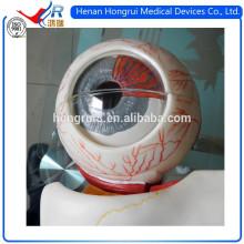 Modelo médico avanzado del globo del ojo de ISO
