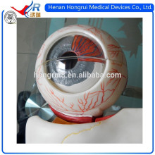 ISO Advanced Medical Eyeball Model