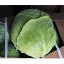 2017 Fresh Green Cabbage for sale