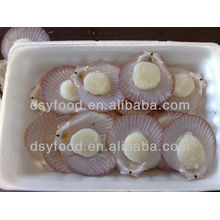 Whole Frozen Sea Scallop