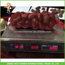 Heißer Verkaufs-chinesische Fabrik-frische Kastanie verpackte im Jute-Beutel