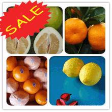 Mandarine alle Arten von Früchten