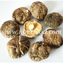 Preço de Fábrica de Qualidade Superior 5-5.5cm Cogumelo Seco Shiitake Suave