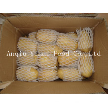 Supply Holland Potato High Quality