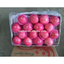 All layers blush fuji apple