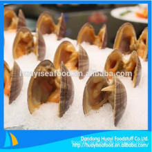 fresh frozen surf clam in shell with best price and services