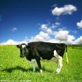 Фитаза кормовая для животных