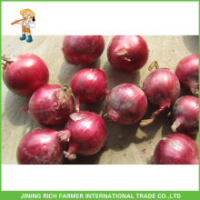 Chinese New Crop Fresh Red Onion