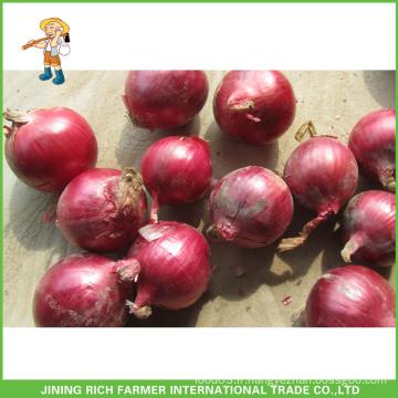 Oignon frais de haute qualité de taille 5-7cm