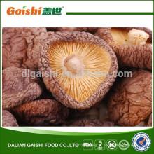 Gaishi cogumelo Shiitake seco de alta qualidade