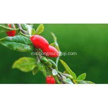 berry goji konvensional 180 wolfberry