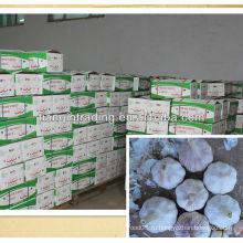 Китайский чеснок для продажи