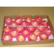 2012 fresh fuji apple