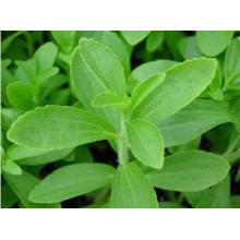 USP Grade Pharmazeutisches Rohmaterial Stevia Blatt Extrakte 90% Min. HPLC