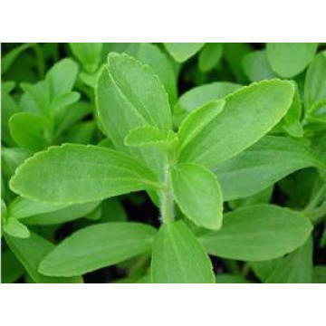GMP Standard Pharmaceutical Ingredients Stevia Leaf Extracts 90%Min. HPLC