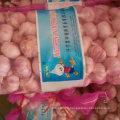 Qualité standard exportée d'ail blanc frais