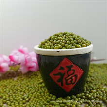 2017 New Corp vert haricot mungo dong à vendre
