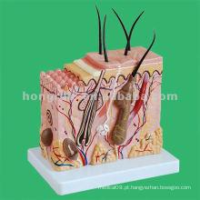 Modelo de bloco de pele humana, modelo de educação