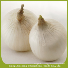 China new season yellow onion hot sale