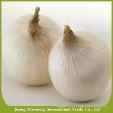 China nova temporada amarelo cebola venda quente