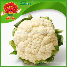 Melhor couve-flor branca Couve-flor fresca