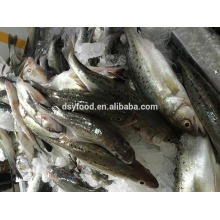 frozen bass fillet (lateolabrax japonicus) for human