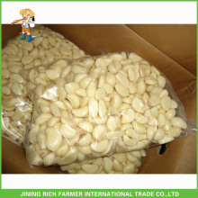 Market prices for shandong fresh peeled garlic