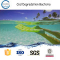 COD DEGRADATION BACTERIA n1