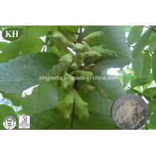 Fonte de Fábrica Extracto de Galo Chinês / Extracto de Rhus Chinensis Ácido Tânico 40% - 99%;
