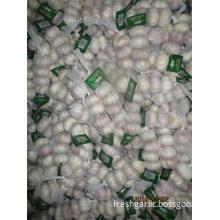 Normal White Garlic Hot Sale