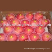 fresh red delicious apple