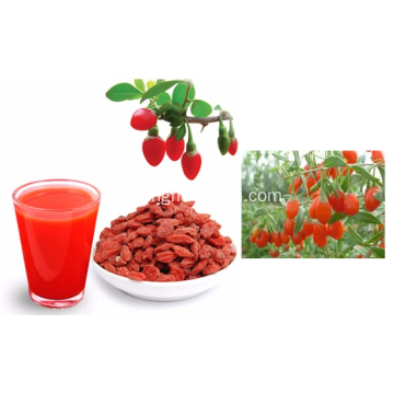 Pure+Authentic+Dried+Goji+Berry