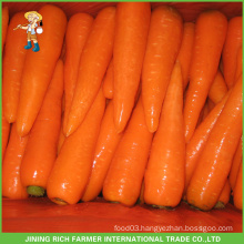 Fresh Carrots Hot For Sales