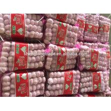 Ail blanc pur 5P * 16 / 5P * 12 sac en filet Chine Jinxiang ail frais