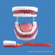 Cuidados com enfermagem 32 Modelo de dentes de tamanho médio para demonstração