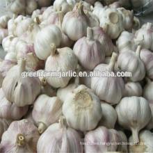 China red garlic para la venta