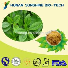 Высокое качество не anabasin женьшень лист П. е. 80% panaxoside