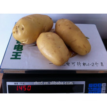 new crop organic Holland Potato/ sweet potato