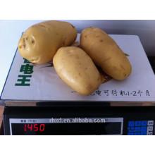 новый урожай органических Голландии картофель/ сладкий картофель