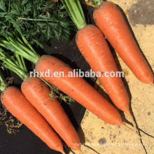 China carrot high grade with fresh carrots specification