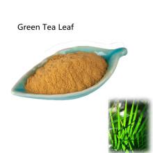 Pharmaceutical Green Tea Leaf active ingredients