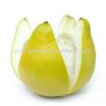 Usine vendent directement de l'huile essentielle de pomelo en vrac en vrac