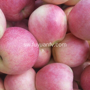 Fresh Delicious Good Quality Qinguan Apple