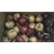 Cebolla precio para kuwait mercado china cebolla precio
