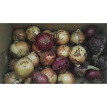 onion price for kuwait market china onion price