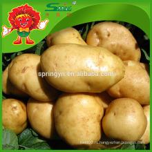 Свежий китайский урожай картофеля 2015