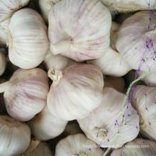 Fresh Fresh Crop Red Garlic De Shandong